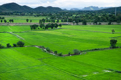 Campo verde do arroz em Kanchanaburi, Tailândia Imagens de Stock Royalty Free