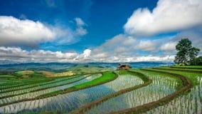 Campo verde do arroz do terraço com Mountain View fotografia de stock royalty free