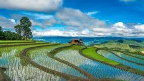 Campo verde do arroz do terraço da casa de campo com Mountain View imagem de stock