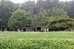 Campo verde do verão Fotos de Stock