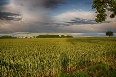 Campo verde dopo il paesaggio della pioggia Fotografia Stock Libera da Diritti