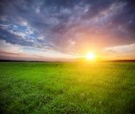 Campo verde e bello tramonto Fotografia Stock Libera da Diritti