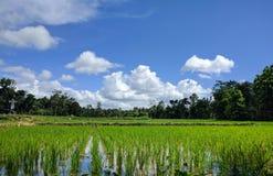 Campo verde e céu azul Fotos de Stock Royalty Free