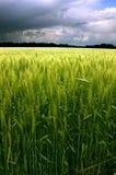 Campo verde e céu azul nebuloso imagem de stock