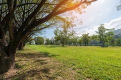 Campo verde e grande linea di alberi dei rami al sole Immagine Stock Libera da Diritti