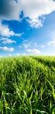 Campo verde e nubi bianche Immagine Stock