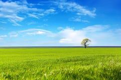 Campo verde ed albero solo Fotografie Stock Libere da Diritti