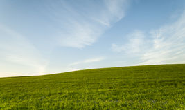 Campo verde ed ambiente blu del cielo nuvoloso Fotografie Stock Libere da Diritti