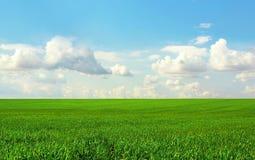 Campo verde ed il cielo blu fotografia stock libera da diritti