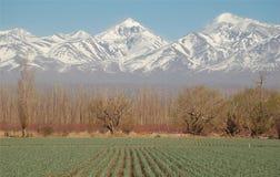 Campo verde en altas montañas Fotos de archivo libres de regalías