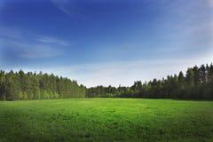 Campo verde en campo Imagen de archivo libre de regalías