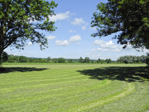 Campo verde en campo Imagenes de archivo