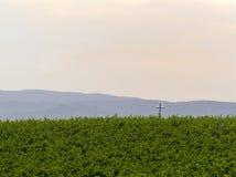 Campo verde en campo italiano Fotografía de archivo