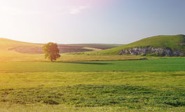 Campo verde en la puesta del sol foto de archivo libre de regalías