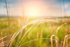 Campo verde en la salida del sol Fotos de archivo