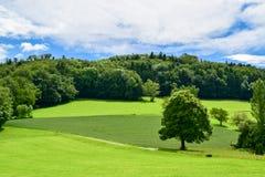 Campo verde en Suiza Foto de archivo libre de regalías