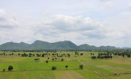 Campo verde en Tailandia Imagenes de archivo