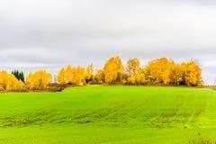 Campo verde en una colina del aut del cielo nublado del fondo del abedul amarillo Imágenes de archivo libres de regalías