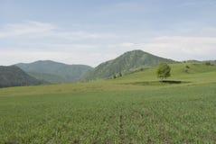 Campo verde, espaço livre Fotografia de Stock