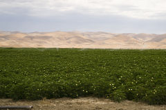 Campo verde fertile California Stati Uniti di agricoltura della terra dell'azienda agricola Fotografia Stock Libera da Diritti