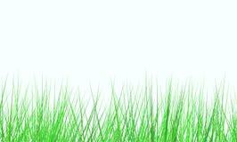 Campo verde fresco Immagine Stock