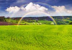 Campo verde fresco Fotografie Stock