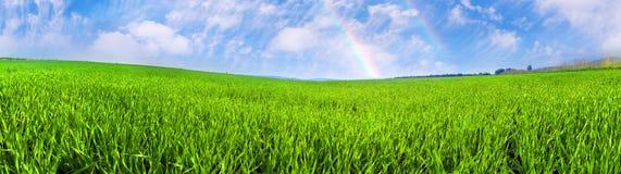 Campo verde fresco Imágenes de archivo libres de regalías