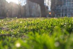 Campo verde fresco de la hierba, en una tarde brillante y soleada en New York City imagenes de archivo