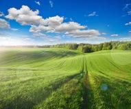 Campo verde grande del centeno imagen de archivo