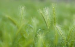 Campo verde hermoso Fotografía de archivo libre de regalías