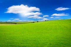 Campo verde hermoso en el cielo azul con luz del sol fotos de archivo libres de regalías