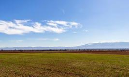 campo verde intenso, bello chiaro cielo blu in nuvole confuse bianche, Bulgaria fotografia stock