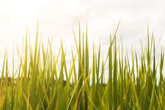 Campo verde imagen de archivo libre de regalías