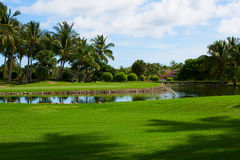Campo verde, libra con las palmeras Foto de archivo