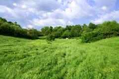 Campo verde magnífico Fotos de archivo libres de regalías