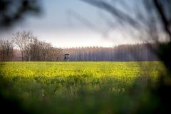 Campo verde na borda de uma torre da caça Imagem de Stock