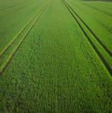 Campo verde na manh? imagens de stock royalty free