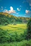Campo verde natural con Mountain View foto de archivo libre de regalías