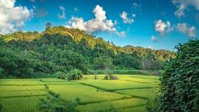 Campo verde natural con Mountain View imagen de archivo libre de regalías