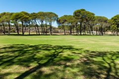 Campo verde nel parco Immagine Stock