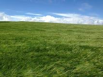 Campo verde nel vento Fotografia Stock Libera da Diritti