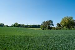 Campo verde nella campagna danese Fotografie Stock Libere da Diritti