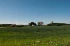 Campo verde nella campagna danese Fotografia Stock