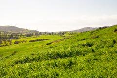 Campo verde nella valle della montagna Paesaggio agricolo nell'ora legale Immagini Stock
