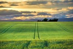 Campo verde no por do sol Imagens de Stock