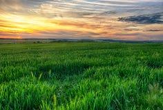 Campo verde no suset Foto de Stock