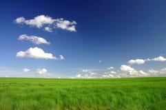 Campo verde perfetto Fotografia Stock Libera da Diritti