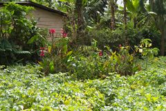 Campo verde perto de Mount Meru fotos de stock royalty free
