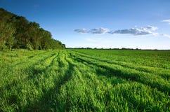 Campo verde in primavera Fotografie Stock Libere da Diritti