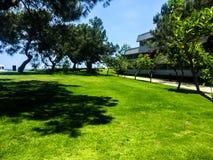 Campo verde que corre ao longo do mar fotografia de stock